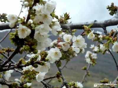 Cerezos en flor; Valle del Jerte; rutas de senderismo en guadalajara equipamiento de montaña puente